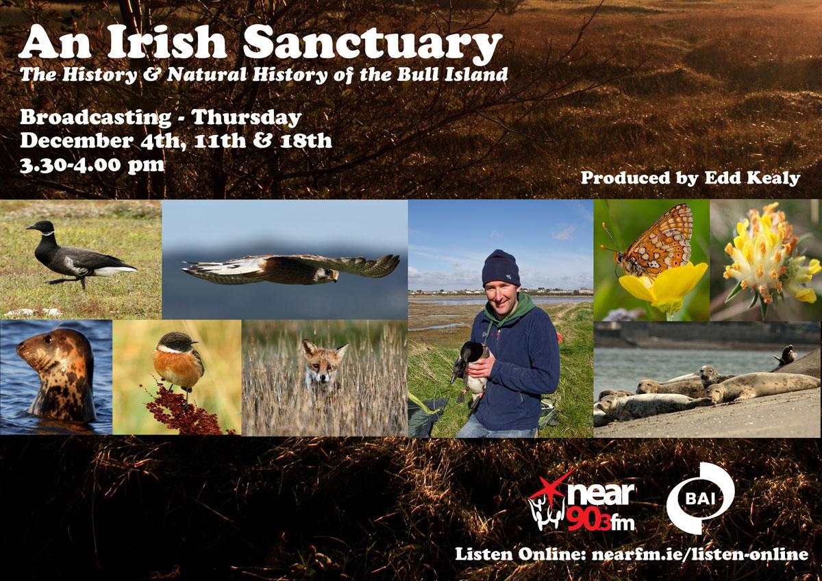 Irish-sanctuary-final